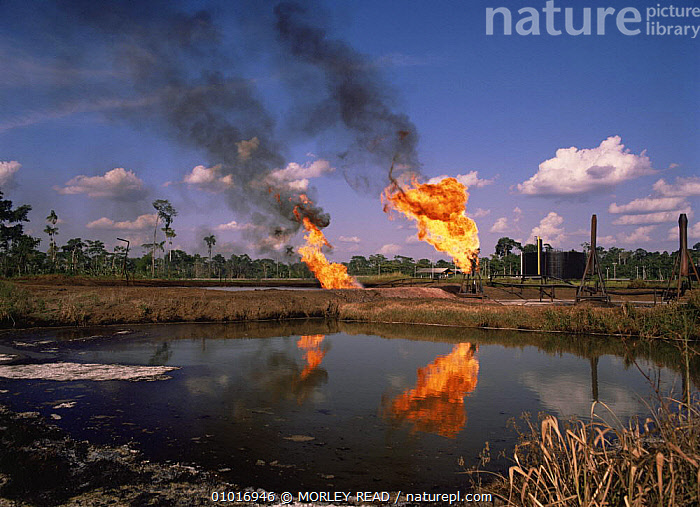 Burning off gas beside pool of waste water, Shushufindi oil prodcution site, Ecuador  ,  CRUDE OIL,DEFORESTATION,FIRE,FLAME,INDUSTRY,POLLUTION,SMOKE,SOUTH AMERICA,WATER  ,  MORLEY READ