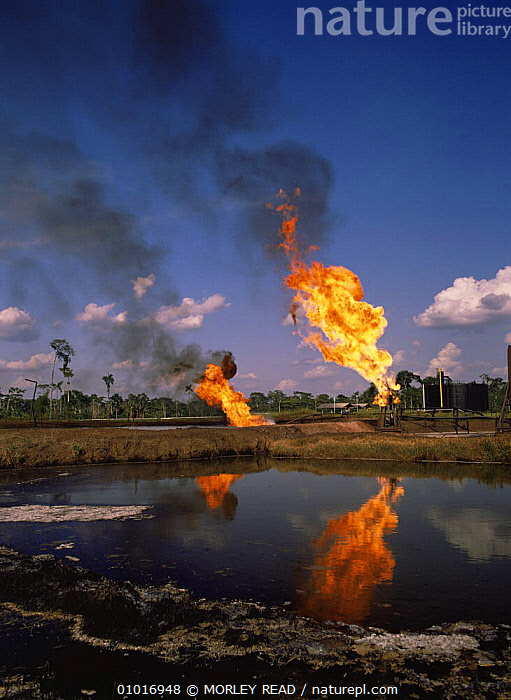 Burning off gas beside pool of waste water, Shushufindi oil prodcution site, Ecuador  ,  CRUDE OIL,DEFORESTATION,FIRE,FLAMES,INDUSTRY,POLLUTION,REFLECTIONS,SOUTH AMERICA,TROPICAL RAINFOREST,VERTICAL,WATER  ,  MORLEY READ