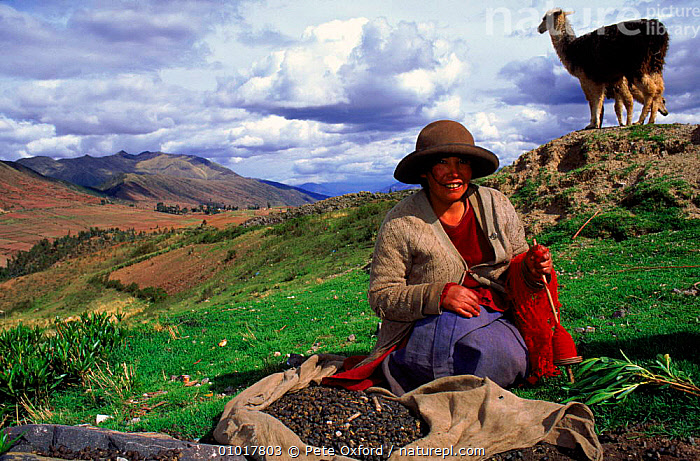 Local Indian woman with llama near Cusco, Peru, South America. Woman spinning in a traditional fashion.  ,  AMERICA,COLOURFUL,CONCEPTS,CULTURES,CUSCO,HOLIDAYS,HORIZONTAL,LANDSCAPES,LLAMA,MAMMALS,MOUNTAINS,OUTSTANDING,PEOPLE,PO,SOUTH,SPINNING,TRADITIONAL,WOMAN,SOUTH-AMERICA  ,  Pete Oxford
