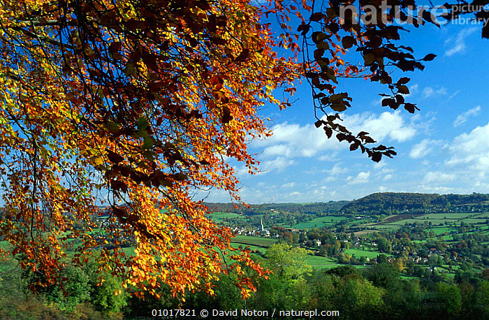 View towards Painswick and surrounding countryside, the Cotswolds, Gloucestershire  ,  AUTUMN,BUILDINGS,EUROPE,FARMLAND,FIELDS,HOLIDAYS,LANDSCAPES,OUTSTANDING,PEACEFUL,UK,VILLAGES,United Kingdom,Concepts,British,ENGLAND  ,  David Noton