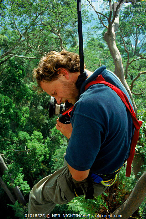 Richard Kirby filming high in rainforest on location for 'Private Life of Plants'. Sabah, South East Asia  ,  ASIA,CAMERA,CANOPY,HARNESS,IN,KIRBY,PEOPLE,RAINFOREST,RICHARD,SABAH,SOUTH EAST ASIA,TROPICAL,TROPICAL RAINFOREST,VERTICAL,WILD  ,  NEIL NIGHTINGALE