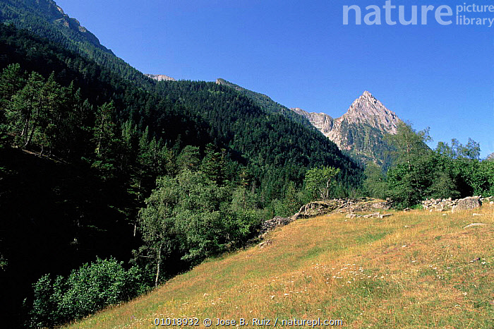 Aigues Tortes St. Mauricio NP, Pyrenees, Spain. Pyrenees  ,  AIGUES,ALPINE,MAURICIO,MOUNTAINS,NATIONAL PARK,NP,PLANTS,PYRENEES,RR,TORTES,TREES,Europe  ,  Jose B. Ruiz