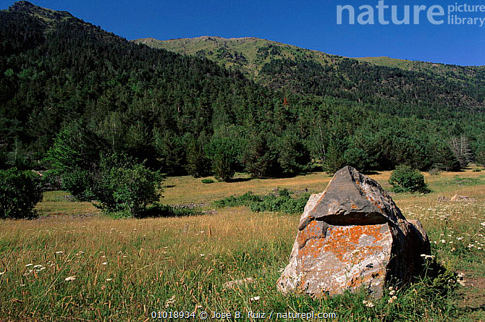 Aigues Tortes, St. Mauricio NP, Pyrenees, Spain  ,  AIGUES,ALPINE,HORIZONTAL,LANDSCAPE,MAURICIO,MEADOW,MOUNTAINS,NATIONAL PARK,NP,PLANTS,PYRENEES,RR,TREES,Europe  ,  Jose B. Ruiz