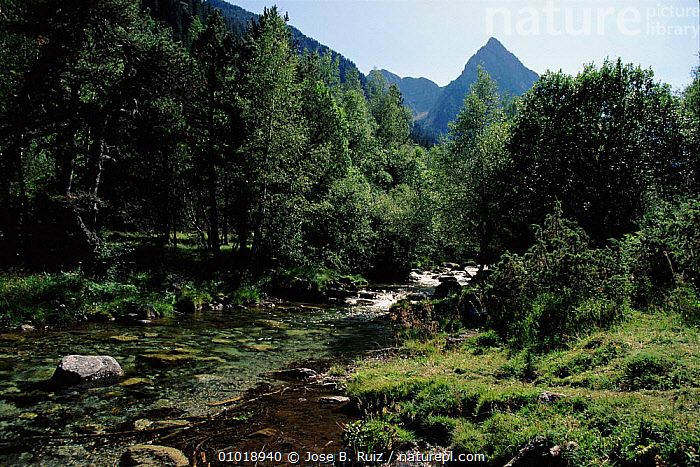 Aigues Tortes, St. Mauricio NP, mountain stream, Pyrenees, Spain  ,  NP,AIGUES,PYRENEES,MIXED WOOD,TORTES,WOODLANDS,MOUNTAINS,,HORIZONTAL,STREAM,RR,MAURICIO,PEACEFUL ,RIVERS,CONCEPTS,NATIONAL PARK,Europe  ,  Jose B. Ruiz