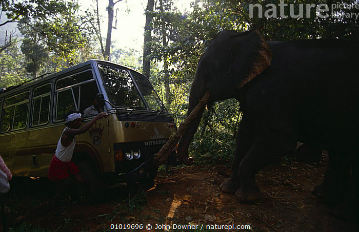Domestic Indian elephant {Elephas maximus} towing coach out of ravine, India  ,  DOMESTICATED,ELEPHANTS,INDIA,INDIAN SUBCONTINENT,MAMMALS,PEOPLE,POWERFUL,PROBOSCIDS,STRONG,VEHICLES,VERTEBRATES,WORKING,Asia,Concepts  ,  John Downer