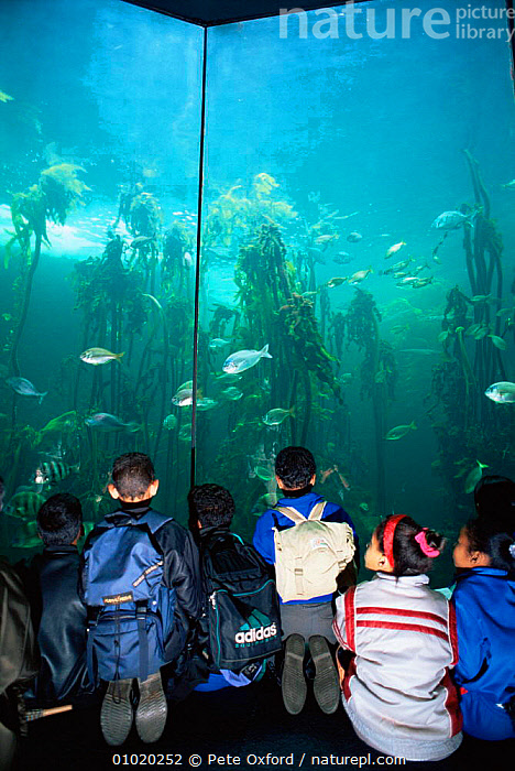 Children watch fish at Two Ocean's Aquarium, Cape Town, South Africa., AFRICA,EDUCATION,PEOPLE,SOUTHERN AFRICA,TOURISM,VERTICAL, Pete Oxford