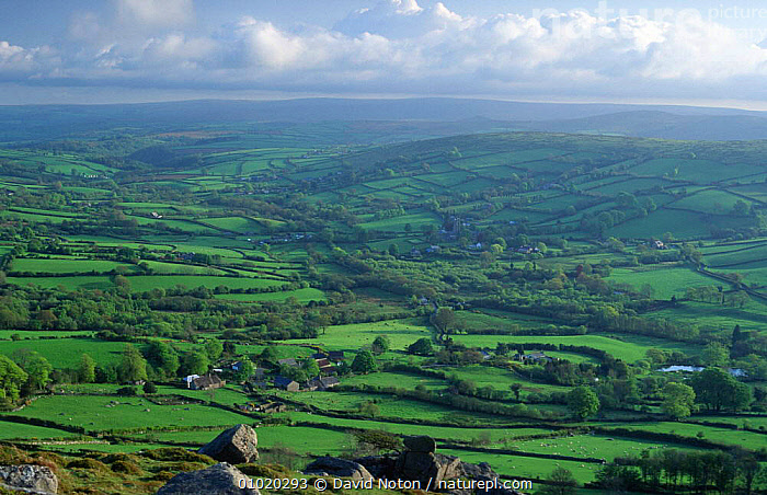 View over countryside above Widdecombe-in-the-Moor, Dartmoor National Park, Devon., EUROPE,FARMLAND,FIELDS,GRASSLAND,LANDSCAPES,MOOR,MOORLAND,NP,OUTSTANDING,UK,VILLAGES,WIDDECOMBE,United Kingdom,British,National Park,ENGLAND, David Noton