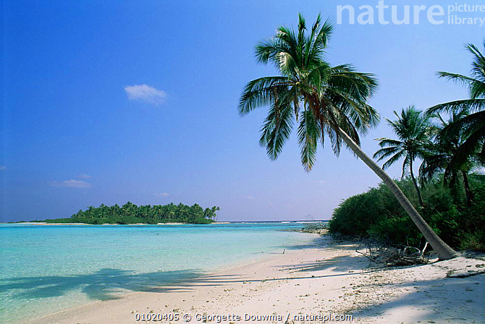 Palm tree fringe on Laccadive Islands beach, Indian Ocean - blue sky, turquoise sea and white sand beach, ASIA,BEACHES,COASTAL WATERS,COASTS,HOLIDAYS,INDIAN OCEAN,INDIAN SUBCONTINENT,LANDSCAPES,MARINE,OCEAN,SEA,SHORELINE,TREES,TROPICAL,Concepts,Plants, Georgette Douwma