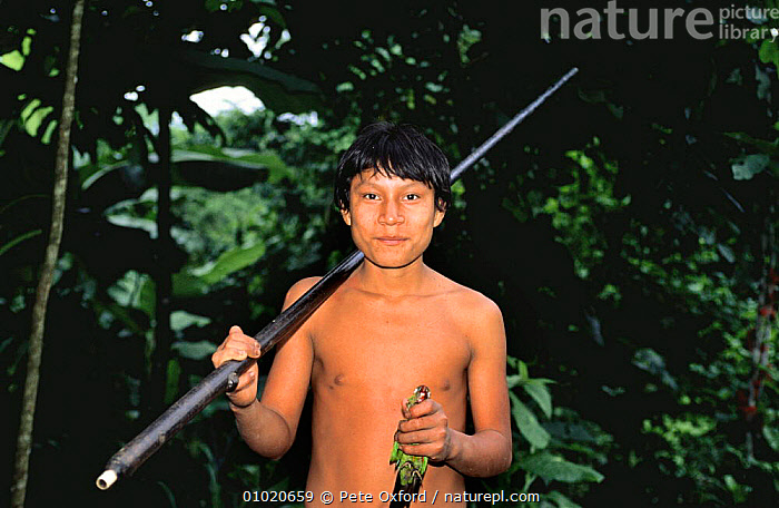 Young Quichua Indian with blow gun and dead Maroon tailed parakeet prey, Ecuadorian Amazon, BIRDS,BOY,CULTURES,DEATH,HUNTING FOOD,JUVENILE,PEOPLE,PORTRAITS,PREY,SOUTH AMERICA,TRADITIONAL,TRIBES,TROPICAL,TROPICAL RAINFOREST,YOUNG, Pete Oxford