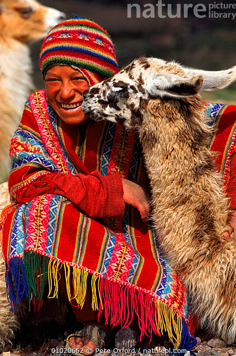 Local Indian with Llama. Cusco, Peru. South America., AMERICA,COLOURFUL,CONCEPTS,CULTURES,CUSCO,CUTE,FRIENDSHIP,HOLIDAYS,HUMOROUS,LLAMA,MAMMALS,OUTSTANDING,PEOPLE,PO,RED,SOCIAL BEHAVIOUR,SOUTH,TRADITIONAL,VERTICAL,SOUTH-AMERICA, Pete Oxford