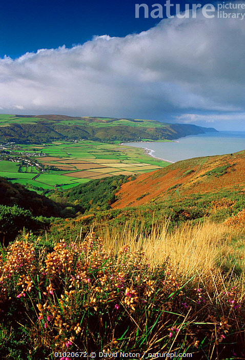 The coast from Bossington Hill, Exmoor National Park, Somerset, England., ATMOSPHERIC,COASTS,COLOURFUL,ENGLAND,EUROPE,HOLIDAYS,NP,OUTSTANDING,PEACEFUL,SUMMER,UK,United Kingdom,Concepts,British,National Park, David Noton