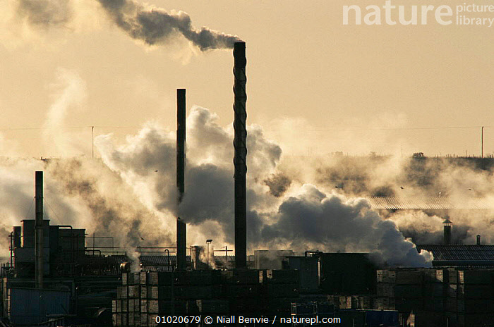 Steam venting from a food processing factory in Scotland. Industry in Angus., ATMOSPHERIC,BUILDINGS,ENERGY,EUROPE,INDUSTRY,MACHINERY,OUTSTANDING,POLLUTION,SCOTLAND,UK,URBAN,United Kingdom,British, United Kingdom, United Kingdom, Niall Benvie