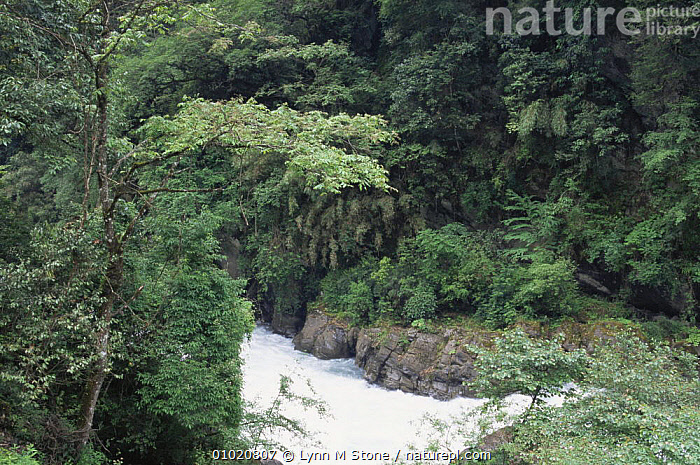 Qionglai Mountians, Sichuan, China - stream within forest area, ASIA,CHINA,CLOUD FOREST,PLANTS,RIVERS, Lynn M Stone