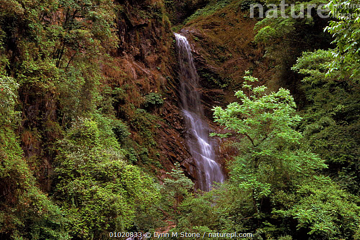 Wolong Nature Reserve, Sichuan, China. Stream in the cloud-forest, ANCIENT,ASIA,CLOUD FOREST,FOREST,LS,PLANTS,RESERVE,SOUTH,STREAM,TREES,WATERFALLS,WOLONG,CHINA, Lynn M Stone