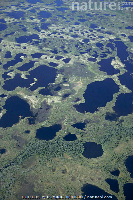 Aerial view of Tyumen Oblast region in summer, Siberia, Aerial,ASIA,CIS,LANDSCAPES,RUSSIA,SUMMER,TUNDRA,VERTICAL,WETLANDS, DOMINIC JOHNSON