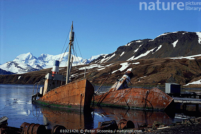 Old boats at abandonned whaling station, Grytviken, South Georgia, South Atlantic, ANTARCTICA,BOATS,BUILDINGS,COASTS,HUNTING FOOD,INDUSTRY,MARINE,MOUNTAINS,OLD,POLAR,ruins,sea,shoreline,SNOW,south atlantic islands,WHALING,USA,FALKLAND ISLANDS,North America, PETER SCOONES