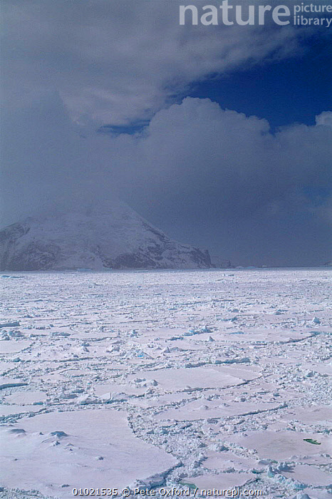 Pack ice off Saunders Island, South Sandwich Island, Falklands 1998, ANTARCTICA,CLOUDS,coastal waters,COASTS,COLD,Falkland Islands,Frozen,ICE,LANDSCAPES,MARINE,packice,POLAR,sea,south atlantic islands,SOUTH AMERICA,VERTICAL,WINTER,Weather,SOUTH-AMERICA, Pete Oxford