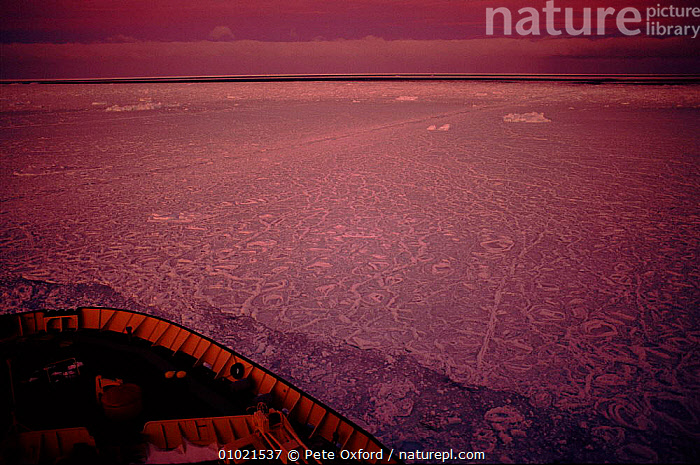 Russian ice breaker cruising through pack ice. Weddell Sea. Eco-tourism, BREAKER,CRUISING,PACK,WEDDELL,HORIZONTAL,ECO TOURISM,HOLIDAYS,ICE,TOURISM,BOATS,RUSSIAN,ATMOSPHERIC,SEA,CONCEPTS, Pete Oxford