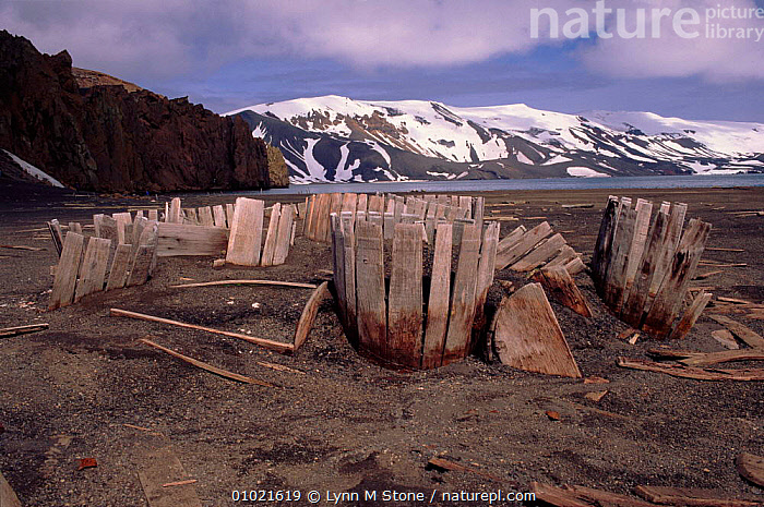 Abandoned wooden whaling cask on beach. Deception Island, Antartica, BEACHES,HORIZONTAL,INDUSTRY,SHORE,TRADITIONAL,WHALING, Lynn M Stone