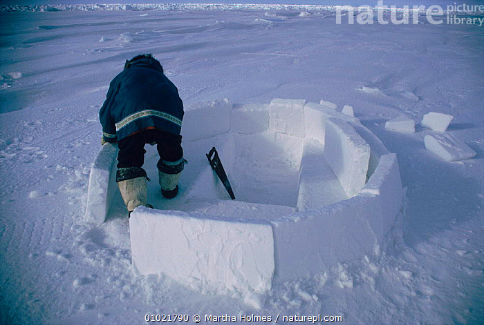 Inuit building igloo on sea ice, sequence. Admiralty inlet Canada, HOMES,INTERESTING,TRIBES,PEOPLE,ADMIRALTY,HORIZONTAL,IGLOO,MAKING,SEQUENCE,(251.11),INUIT,TRADITIONAL,ARCTIC,INLET,BUILDINGS,MH,ICE,North America, Martha Holmes