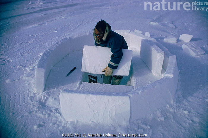 Inuit building igloo on sea ice, sequence. Admiralty inlet Canada, HORIZONTAL,ICE,MH,TRADITIONAL,INLET,MAKING,SNOW,INUIT,PEOPLE,INTERESTING,BUILDINGS,IGLOO,TRIBES,ARCTIC,HOMES,ADMIRALTY,SEQUENCE,North America, Martha Holmes