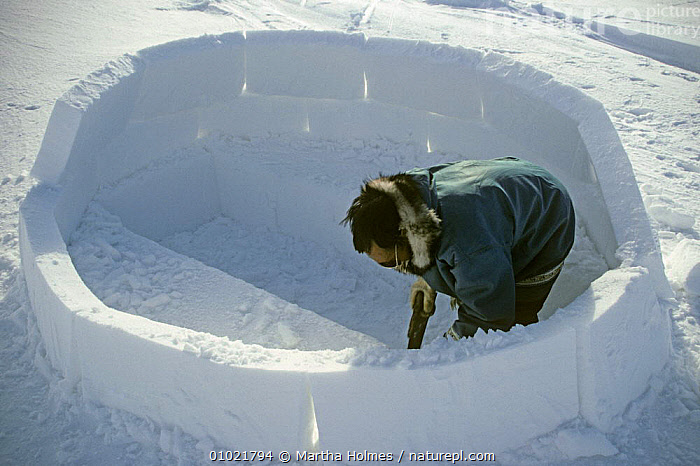 Inuit building igloo on sea ice, Admiralty inlet, Canada, Spring, sequence, ARCTIC,BUILDINGS,CANADA,HOMES,ICE,INTERESTING,NORTH AMERICA,PEOPLE,SEQUENCE,SPRING,TRADITIONAL,TRIBES, Martha Holmes