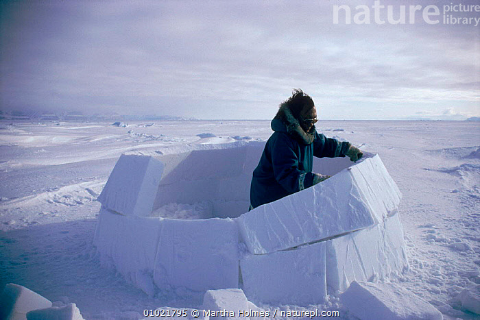 Inuit building igloo on sea ice, sequence. Admiralty inlet Canada, ICE,ADMIRALTY,INLET,MAKING,HOMES,IGLOO,ARCTIC,INTERESTING,MH,SEQUENCE,TRADITIONAL,PEOPLE,TRIBES,BUILDINGS,INUIT,HORIZONTAL,North America, Martha Holmes