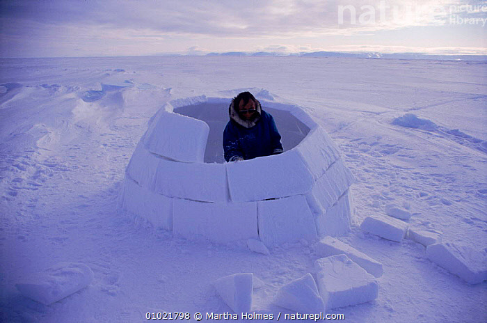 Inuit building igloo on sea ice, sequence. Admiralty inlet Canada, SEA,SNOW,ARCTIC,INTERESTING,SEQUENCE,HOMES,TRIBES,IGLOO,ADMIRALTY,BUILDINGS,TRADITIONAL,INLET,ICE,PEOPLE,HORIZONTAL,INUIT,MH,North America, Martha Holmes