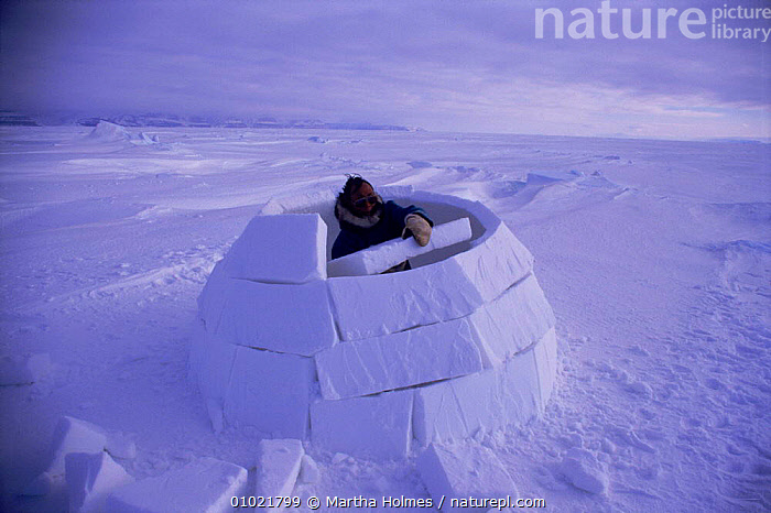 Inuit building igloo on sea ice, sequence. Admiralty inlet Canada, MAKING,MH,ARCTIC,HORIZONTAL,HOMES,SEQUENCE,IGLOO,ADMIRALTY,INUIT,ICE,SEA,TRADITIONAL,INLET,BUILDINGS,TRIBES,INTERESTING,PEOPLE,SNOW,North America, Martha Holmes