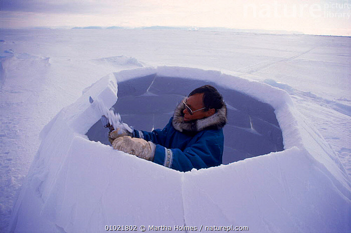 Inuit building igloo on sea ice, sequence. Admiralty inlet Canada, TRADITIONAL,ARCTIC,SPRING,HORIZONTAL,IGLOO,ADMIRALTY,INTERESTING,PEOPLE,SNOW,INLET,SEA,TRIBES,MAKING,MH,SEQUENCE,HOMES,ICE,BUILDINGS,INUIT,North America, Martha Holmes