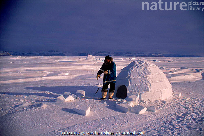Inuit building igloo on sea ice, sequence. Admiralty inlet Canada, ADMIRALTY,ICE,MH,ARCTIC,SNOW,INUIT,HOMES,IGLOO,INLET,TRADITIONAL,BUILDINGS,INTERESTING,HORIZONTAL,PEOPLE,SEQUENCE,TRIBES,North America, Martha Holmes