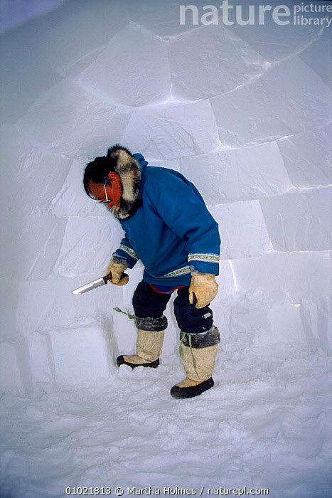 Inuit building igloo on sea ice, sequence. Admiralty inlet Canada, ADMIRALTY,BUILDINGS,INLET,HOMES,MAKING,MH,SEQUENCE,IGLOO,INUIT,PEOPLE,TRIBES,ARCTIC,TRADITIONAL,ICE,INTERESTING,SNOW,VERTICAL,North America, Martha Holmes