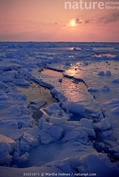 Midnight sun on broken pack ice, Admiralty Inlet ice edge, Canadian Arctic, ARCTIC,ATMOSPHERIC,CANADA,COASTAL WATERS,COASTS,DUSK,ICE,LANDSCAPES,MARINE,NIGHT,NORTH AMERICA,PEACEFUL,POLAR,SEA,SPRING,SUN,SUNSET,VERTICAL,Concepts, Martha Holmes