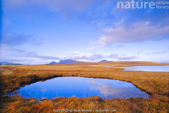 Flow Country near Altnaharra, Scotland. Reflection in bog., BOGS,CLOUDS,CONCEPTS,COUNTRY,EUROPE,MOORLAND,PEACEFUL,PONDS,SKY,WEATHER,WETLANDS, Niall Benvie