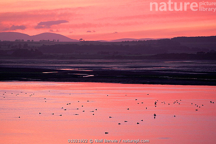 Sunset reflected in Montrose Basin, Angus, Scotland, UK, ATMOSPHERIC,COASTS,DUCKS,estuary,EUROPE,PEACEFUL,REFLECTIONS,SCOTLAND,UK,WATERFOWL,United Kingdom,Concepts,British, Niall Benvie