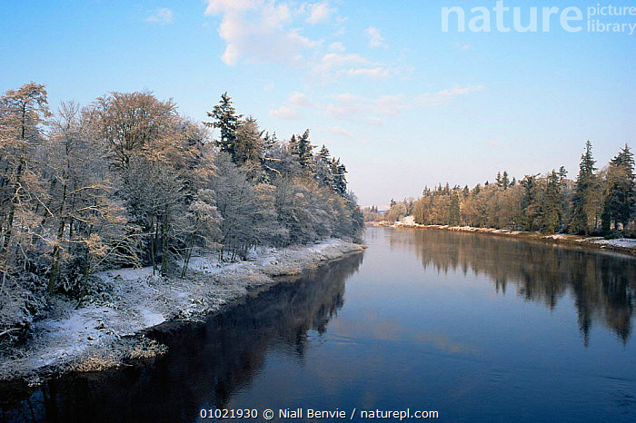 The River Tay in December. Meikleour, Scotland., ATMOSPHERIC,EUROPE,HOLIDAYS,OUTSTANDING,PEACEFUL,REFLECTIONS,RIVERS,SCOTLAND,TREES,UK,WINTER,United Kingdom,Concepts,Plants,British, Niall Benvie