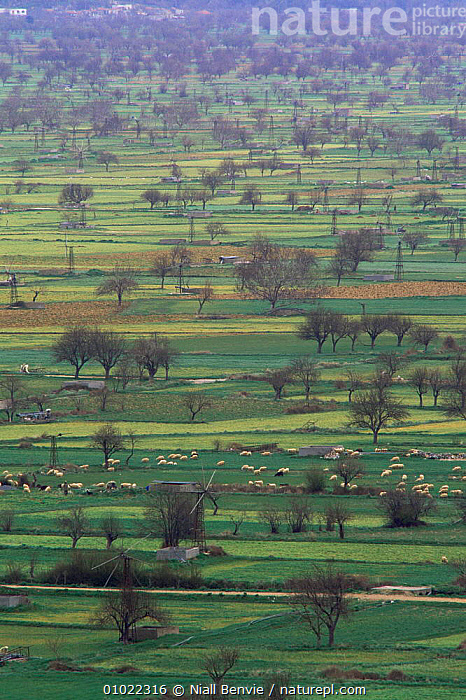 Looking down over the Lasithi plateau, as viewed from Dikteon Cave site up at 3000ft altitude, Crete April 1996, AGRICULTURE,COUNTRYSIDE,EUROPE,farming,fields,GREECE,LANDSCAPES,LIVESTOCK,MEDITERRANEAN,TREES,VERTICAL,Plants, Niall Benvie