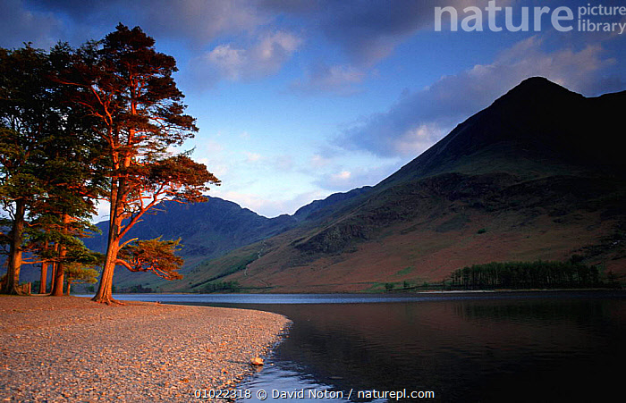 Buttermere lake view with trees, Cumbria, Lake District National Park, UK., ATMOSPHERIC,HOLIDAYS,LAKES,LANDSCAPES,NP,OUTSTANDING,PLANTS,UK,Europe,United Kingdom,Concepts,British,National Park,ENGLAND, David Noton