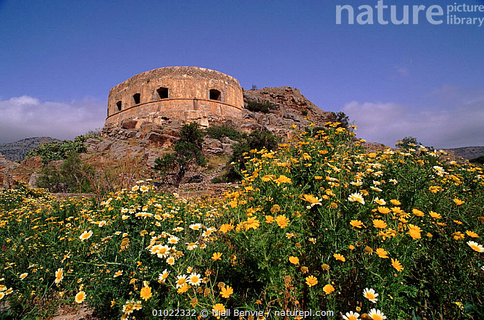 Venetian fort surrounded by wild chrysanthemums, Spinalonga, Crete, FORT,SPINALONGA,SURROUNDED,PLANTS,TOURISM,VENETIAN,FLOWERS,NB,CHRYSANTHEMUMS,MEDITERRANEAN,BUILDINGS,SPRING,GREECE,Europe, Niall Benvie