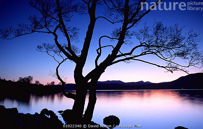 Twilight over Loch Rannoch, Perthshire, Scotland, ARTY SHOTS,ATMOSPHERIC,BLACK,COLOURFUL,DUSK,HOLIDAYS,LAKES,LANDSCAPES,OUTSTANDING,PEACEFUL,REFLECTIONS,SCOTTISH,SILHOUETTES,SKY,SUNSET,Concepts,SCOTLAND,Europe, David Noton