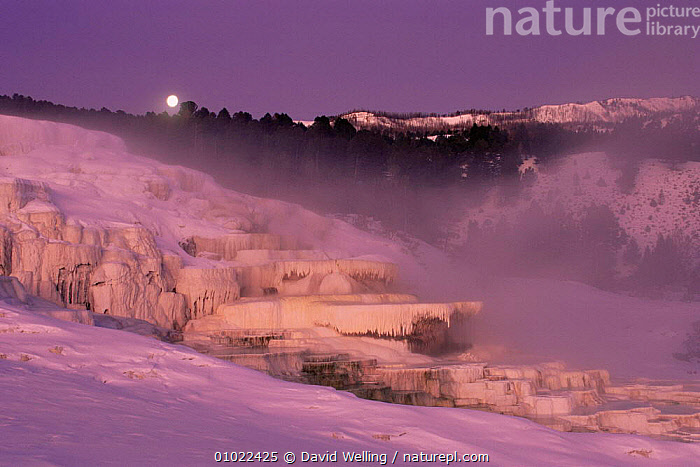 Moonset over Minerva Spring, Yellowstone NP, Wyoming, USA, ATMOSPHERIC,DUSK,GEOTHERMAL,LANDSCAPES,MIST,MOON,moonrise,NIGHT,NORTH AMERICA,SPRING,USA,Geology, David Welling