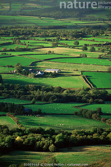 View onto farmland near Brecon, Brecon Beacons NP, Wales, AGRICULTURE,COUNTRYSIDE,EUROPE,FARMLAND,fields,GREEN,LANDSCAPES,PEACEFUL,PLANTS,UK,VERTICAL,WALES,United Kingdom,Concepts,British, David Noton