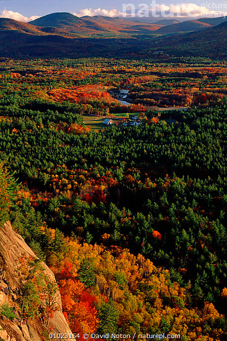 Autumn colours, Saco Valley, USA White mountains, New Hampshire. Landscape of colourful trees., DNO,LANDSCAPE,COLOURFUL,PLANTS,VALLEY,PATTERNS,LEAVES,OUTSTANDING,WHITE,AUTUMN,MOUNTAINS,SACO,ATMOSPHERIC,GROUPS,MIXED WOOD,AMERICA,TREES,VERTICAL,ENGLAND,North America, David Noton