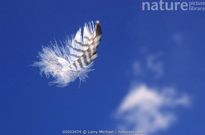 Feather floats in cloud flecked blue sky, ARTY SHOTS,BLUE,CLOUDS,FEATHERS,INDIVIDUALITY,PEACEFUL,SKY,Concepts,Weather, Larry Michael
