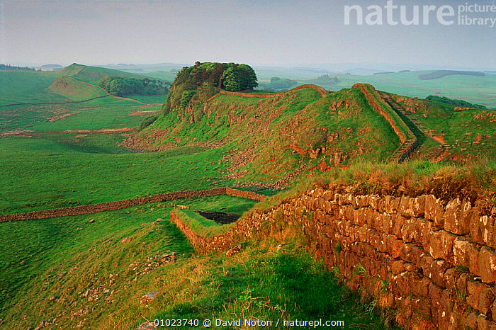 Hadrian's wall at Housesteads, Northumberland, UK., EUROPE,HORIZONTAL,WALL,ANCIENT,LANDSCAPES,ARCHAEOLOGICAL,HOUSESTEADS,MOORLAND,UK,UNITED KINGDOM,BRITISH,ENGLAND, David Noton