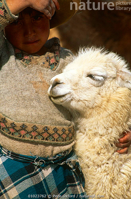 Local indian child with Llama (Lama glama) Cusco, Peru., AFFECTION,ANDES,ARTIODACTYLA,CAMELIDS,CHILDREN,FRIENDSHIP,LLAMAS,MAMMALS,PEOPLE,PETS,SOUTH AMERICA,VERTEBRATES,VERTICAL,Concepts, Pete Oxford