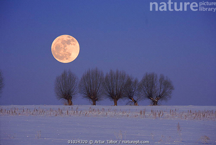 Poland in winter. Podlasie. Full moon and snow landscape.  ,  OUTSTANDING,MOON,ARTY SHOTS,HORIZONTAL,LANDSCAPE,WINTER,NIGHT,ATMOSPHERIC,SNOW,PODLASIE,PEACEFUL,CONCEPTS,Europe  ,  Artur Tabor