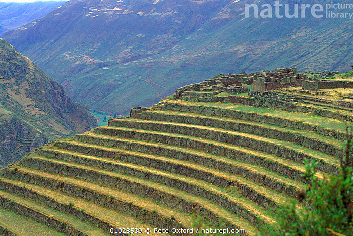 Inca terraces, Pisac, Urubamba Valley, Peru,, AGRICULTURE,AMERICA,ARCHAEOLOGY,CULTURES,HIGHLANDS,HORIZONTAL,INCA,MOUNTAINS,PATTERNS,PISAC,PO,SOUTH,SOUTH AMERICA,TERRACES,TRADITIONAL,URUBAMBA,VALLEY,SOUTH-AMERICA, Pete Oxford