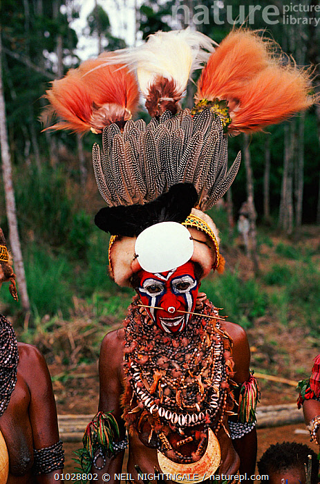 Huli man at sing-sing nr. Mount Hagen, Papua New Guinea. Traditional dress. 1990., ADORNMENT,COLOURFUL,CULTURES,DRESS,FEATHERS,HAGEN,HULI,MALES,MAN,MOUNT,NN,NR,PEOPLE,PORTRAITS,SING SING,TRADITIONAL,TRIBES,VERTICAL,WEST-AFRICA, NEIL NIGHTINGALE