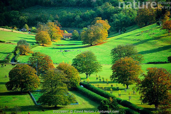 Autumn colours Hambledon Hill. Blandford Forum, Dorset. England countryside, LANDSCAPES,TREES,PEACEFUL,COUNTRYSIDE,PLANTS,FARMLAND,FIELDS,HILL,OUTSTANDING,Concepts,ENGLAND,Europe, David Noton